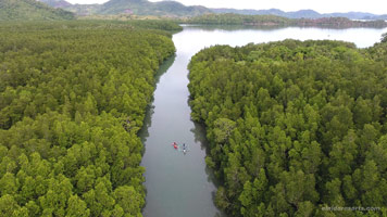 El Nido Resorts activities mangrove tour